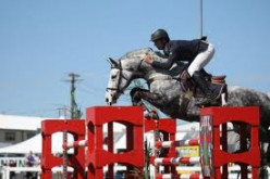Training Your Horse to Jump Obstacles