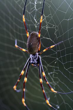 Spider Bites?