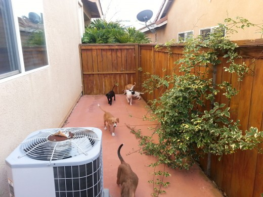 Puppies explore the outside in our safe and clean backyard!