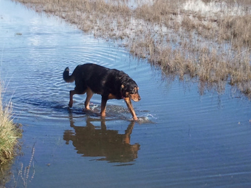 Four days after the death count, Otis returns to the water.