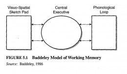 A diagram showing the three components of Baddeley and Hitch's working model of memory!