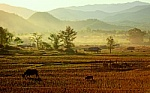 Traditional Farm in Nort of Thailand