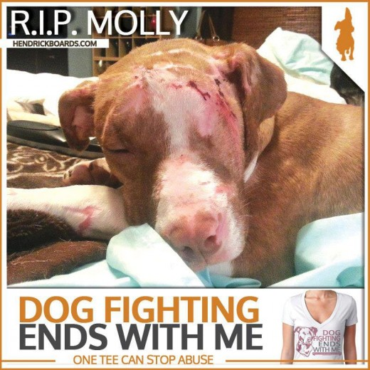 Molly a rescued (too late) fight dog.  RIP Molly