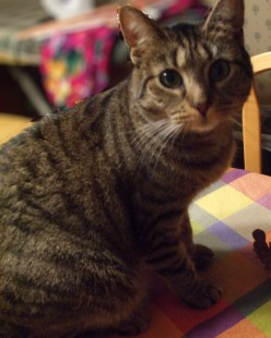 Raffle Basket and Gift Ideas For Cat Lovers