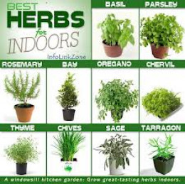 Herbs for indoors