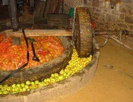 A Cider pressing wheel, usually powered by a Horse.
