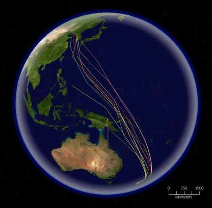 A satellite map showing the northward migration of the bar-tailed godwit from New Zealand all the way to Korea non-stop.