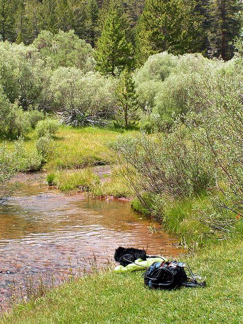 Golden Trout Wilderness, Kern Plateau.