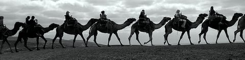 Bedouins on long journey in arid desert depend on Camel Milk for hydration and nutrition.