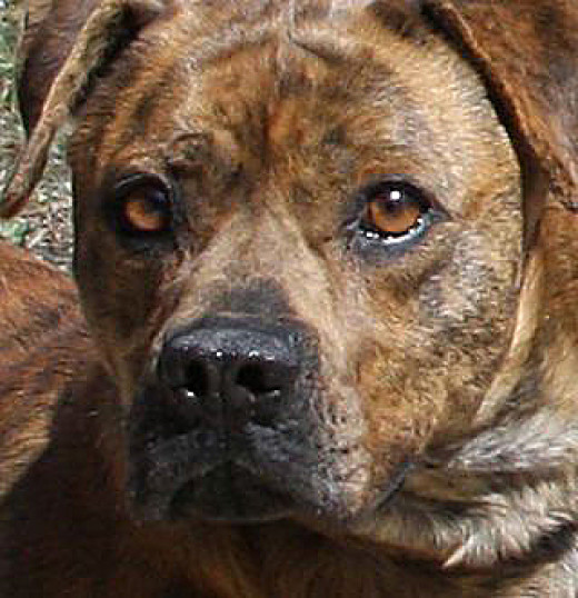 How 'Dangerous Dog' Owners Can Avoid Fatal Attacks