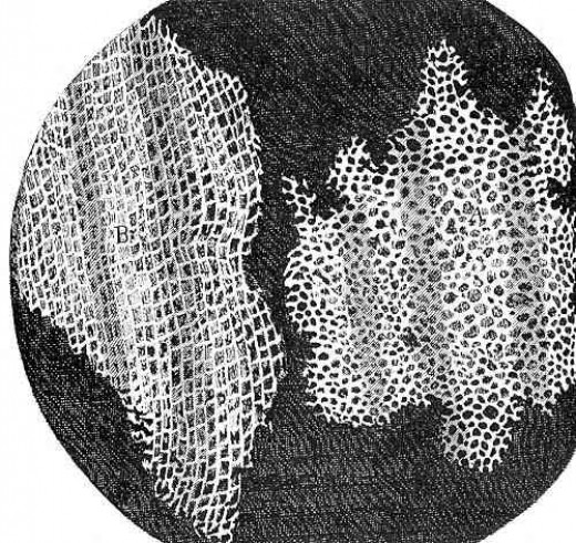 A drawing of cork cells (Robert Hooke)