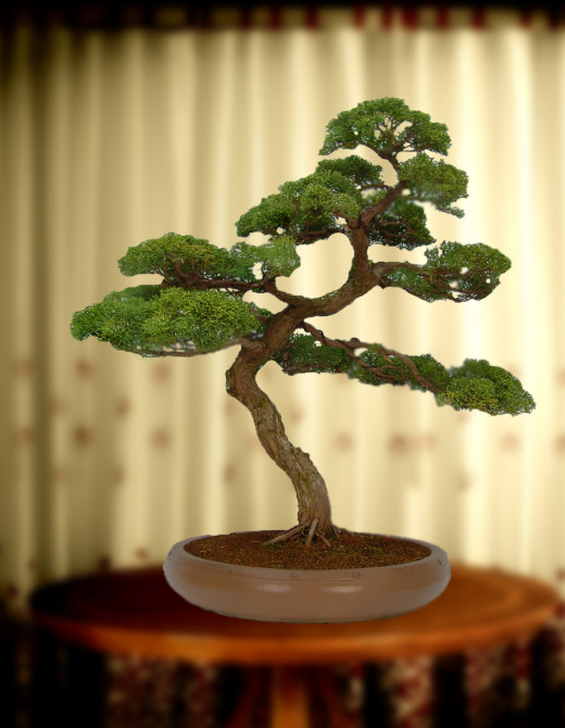 A seven year bonsai