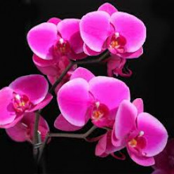 The Wonderful World of Orchids