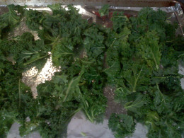 Oiled and salted kale