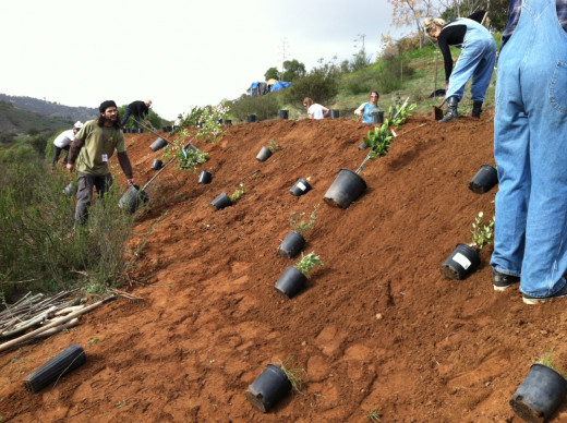 Planting an entire hillside feels good! Fruit, vegetables and more.