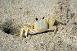To a Little Sand Crab