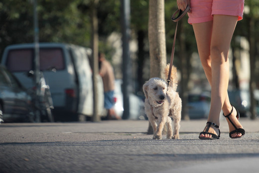 Walking is a great way to bond with your dog.