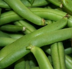 How to Grow Organic Beans