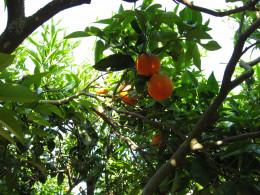 Hubs are like Fruit Trees