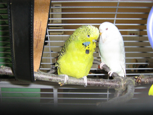 Woody (right).  The other bird is not Sparky, but he is green also