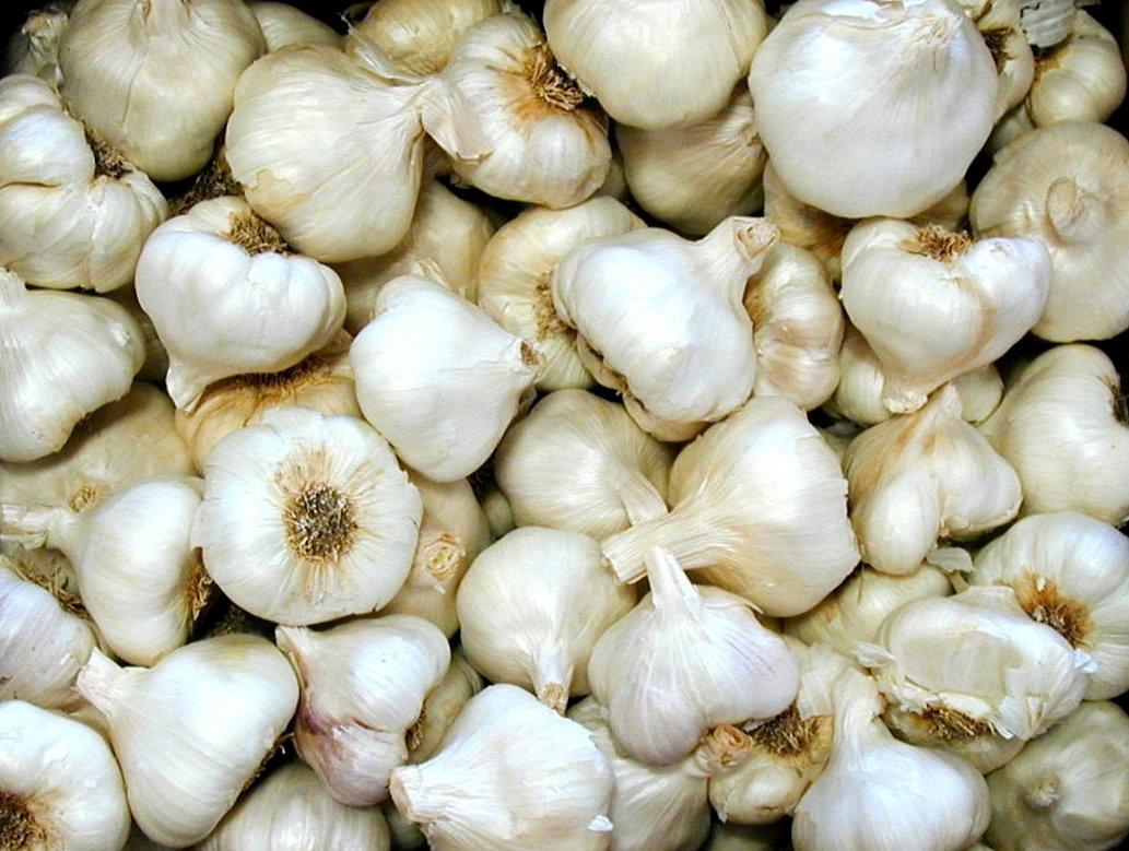 garlic health benefits | hubpages