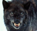 Personal Development:  The Two Wolves Within Us...A Moment With Bill Article