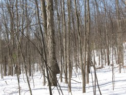 The Miracle of Snowshoeing