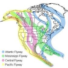 North American Bird Migration Flyways.