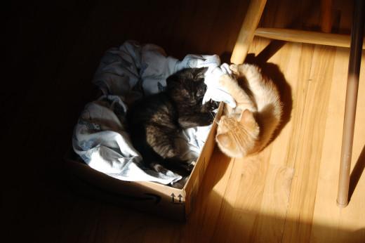 Sun time, Augie & Chai