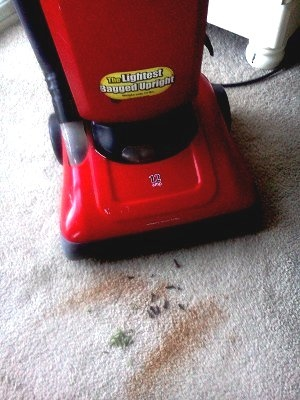 BEFORE:  Cinnamon and basil leaves on floor ready to be vacuumed