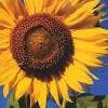 LisaStar profile image