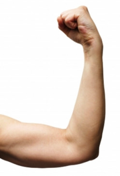 Bicep Exercises: The 7 Best Ways to Work Them Out