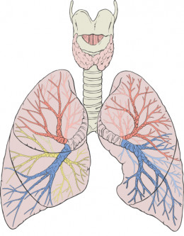 A DVT can lead to part of the clot lodging in the lungs where it is known as a pulmonary embolism.
