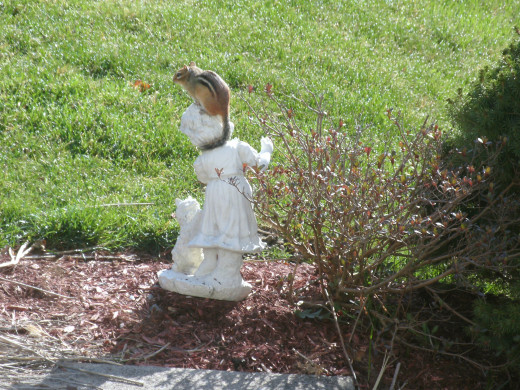 Chippy the chipmunk loves my lawn ornament