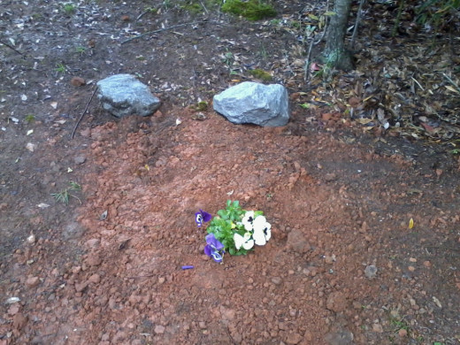 Cookie's grave, next to Kitty, our gray-striped cat of 17 years.