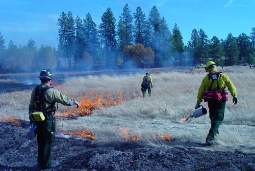 Prescribed fire. Photo by the U.S. Fish and Wildlife Service