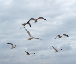 Birds fly in a warming sunshine.