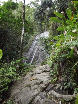Found in the El Yunque National Rain Forest in Puerto Rico