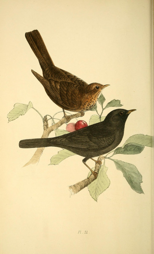 From the book British Birds and Their Eggs