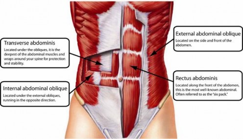 The four types of abdominal muscles.