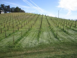 Vineyards in California's Edna Valley