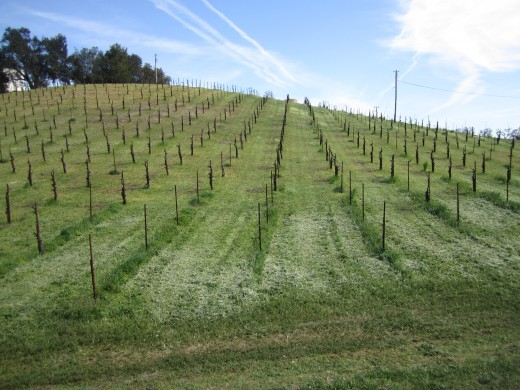Vineyards in California's Edna Valley