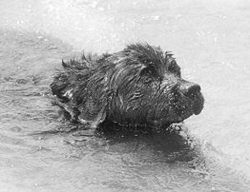 The Titanic and the Newfoundland Dog Who Became a Hero