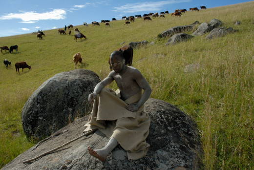 Xhosa initiate looks after cattle in rural Eastern Cape village...Image by Rodger Bosch