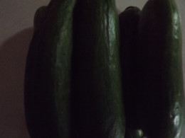 Cucumbers are easy to grow.
