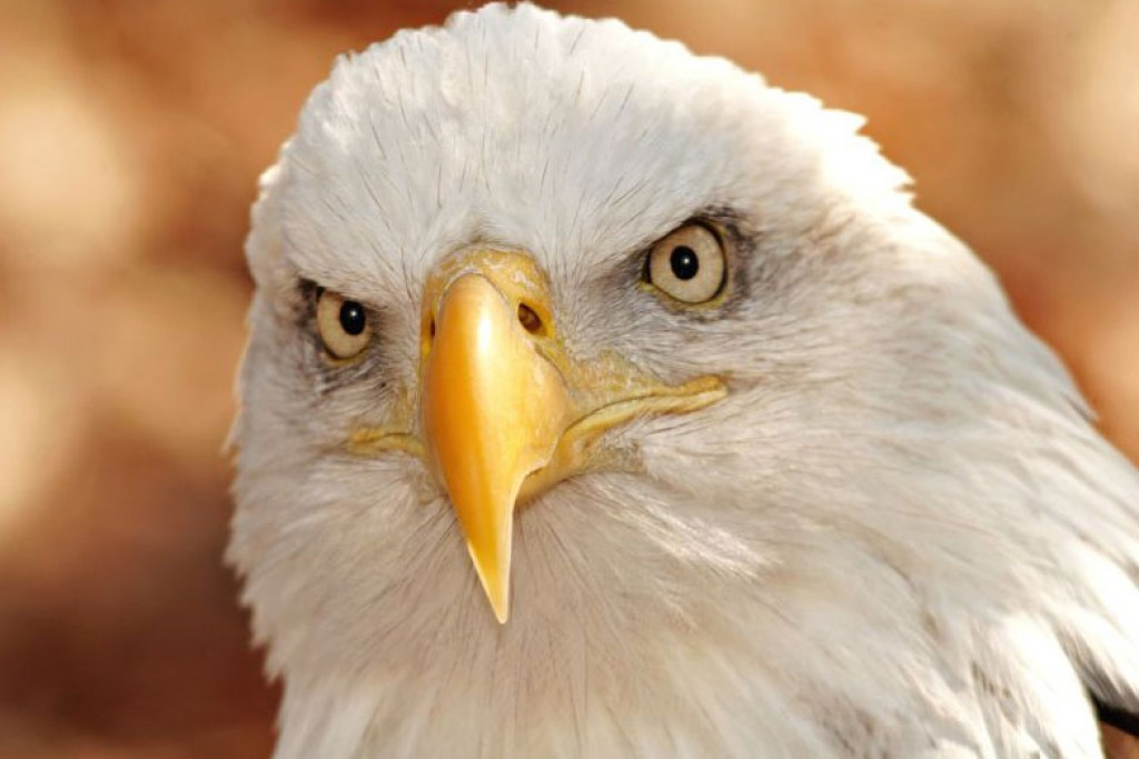 5 Positive Leadership Traits People Can Learn From Eagles Pairedlife