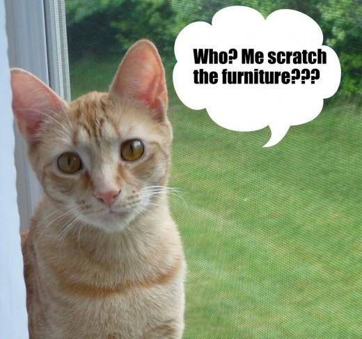How To Stop Cats From Scratching Furniture Pethelpful