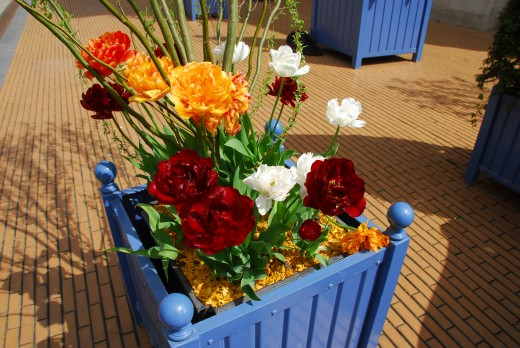 Creative use of colorful wooden planters in France