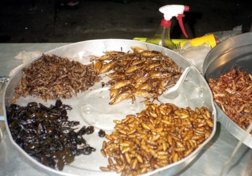 In some parts of the world, eating roaches is normal!