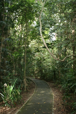 Kuranda Rainforest Walk